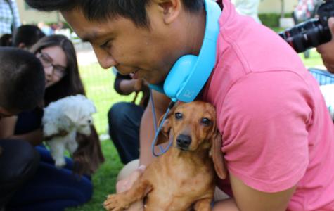 Puppies Help Students Unwind Before Finals