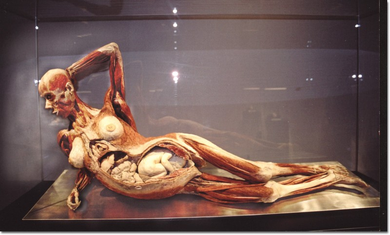Photo by Elizabeth Linares    The exhibit displayed a full plastinated body of an 8-month pregnant woman with her unborn fetus.