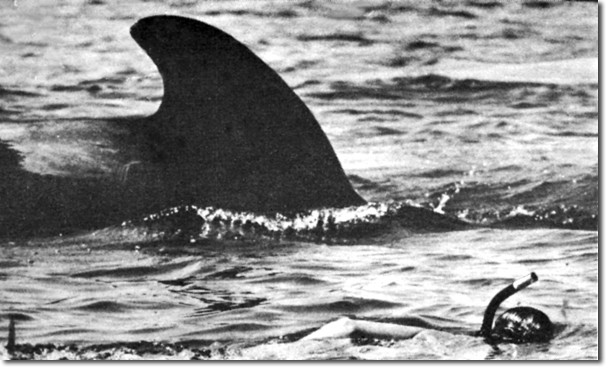 In this Oct. 8, 1982, El Vaquero photo a friendly pilot whale swims with a snorkeling student in the Sea of Cortez.