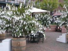 21 crepe myrtles in recycled half wine barrels collected wishes in Old Town Pasadena.