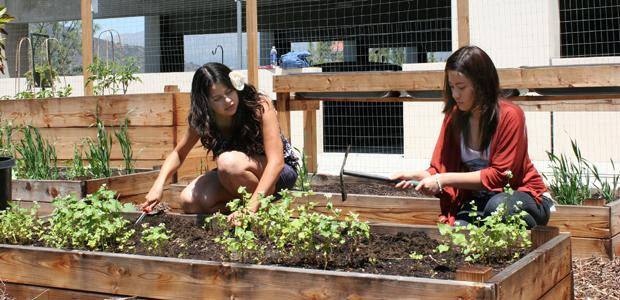 GCC Environmental Club Grows Healthy Food Options