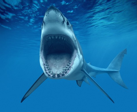 Taking a Bite Out of Shark Hysteria